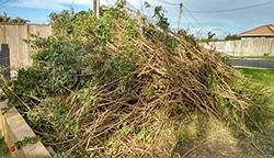 Garden Waste To Put In Skip Bin